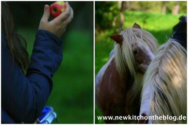 Apfel-Mohnkuchen mit Nussstreuseln