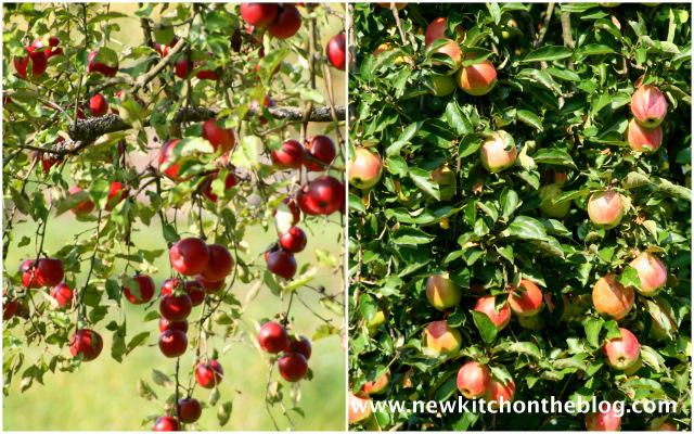 Apfelbäume: Äpfel für Apfel-Wildheidelbeer-Crumble-Rezept